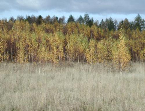 Milyen az öröklött erdő?