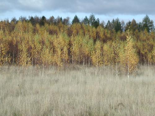 Örökölt erdő